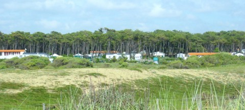 A campsite in the dunes and in pine trees
